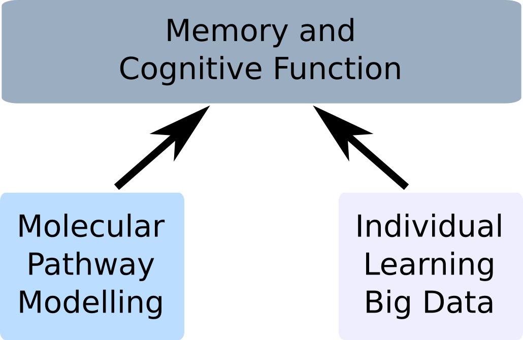 Research in the Stefan lab: Using computational methods to understand learning and memory